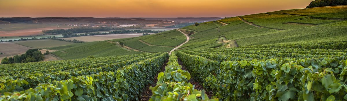 Day trips from Paris-Featured photo (1200x350) Champagne Wine Region