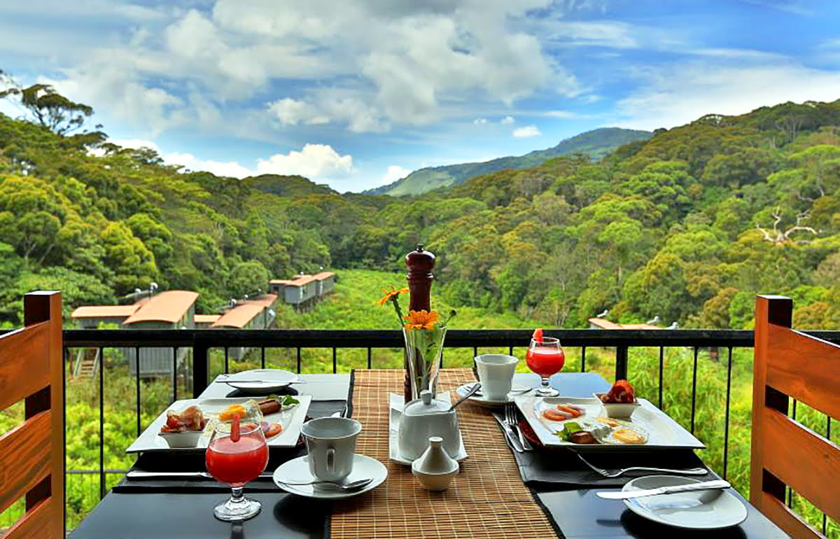 Wilderness hotels-resorts-accommodations-The Rainforest Ecolodge