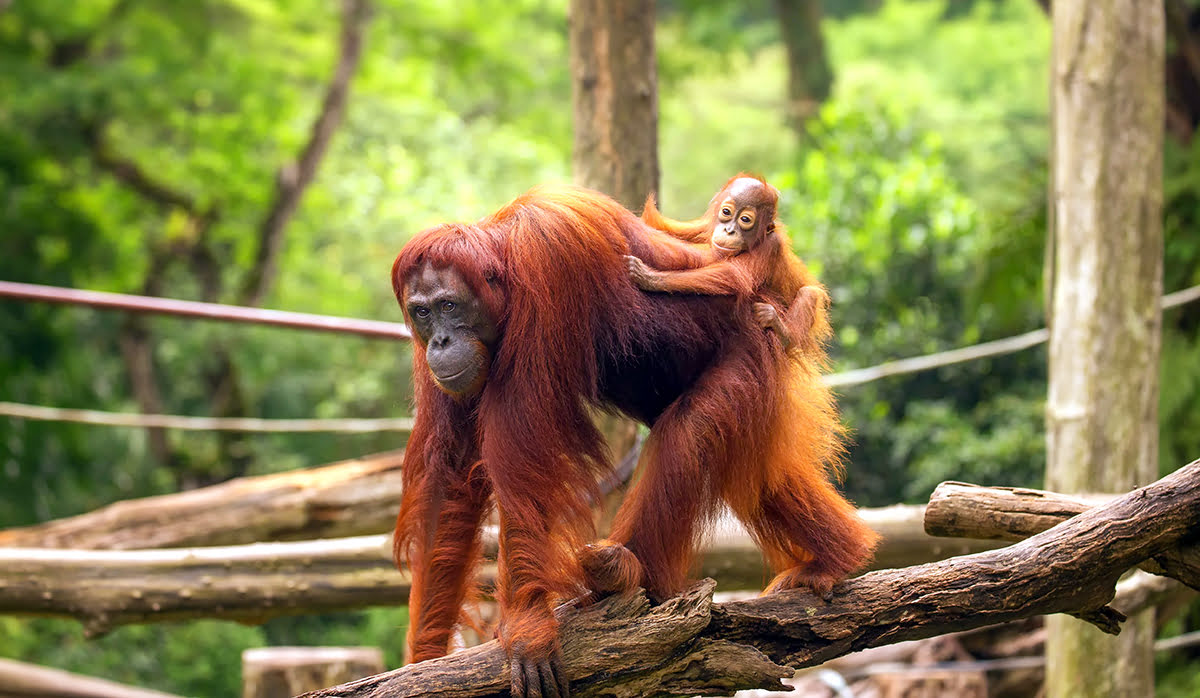 Places to visit in Singapore-Singapore Zoo