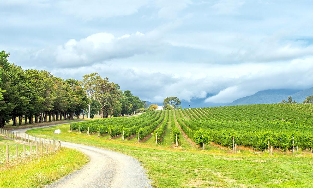 Wine tasting tours-vineyards-wineries-Yarra Valley