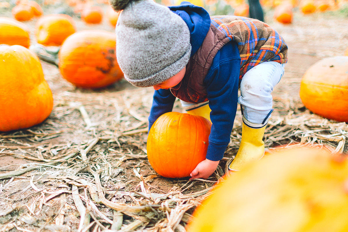 Pumpkin patches-fun fall activities for families-Cantref Adventure Farm