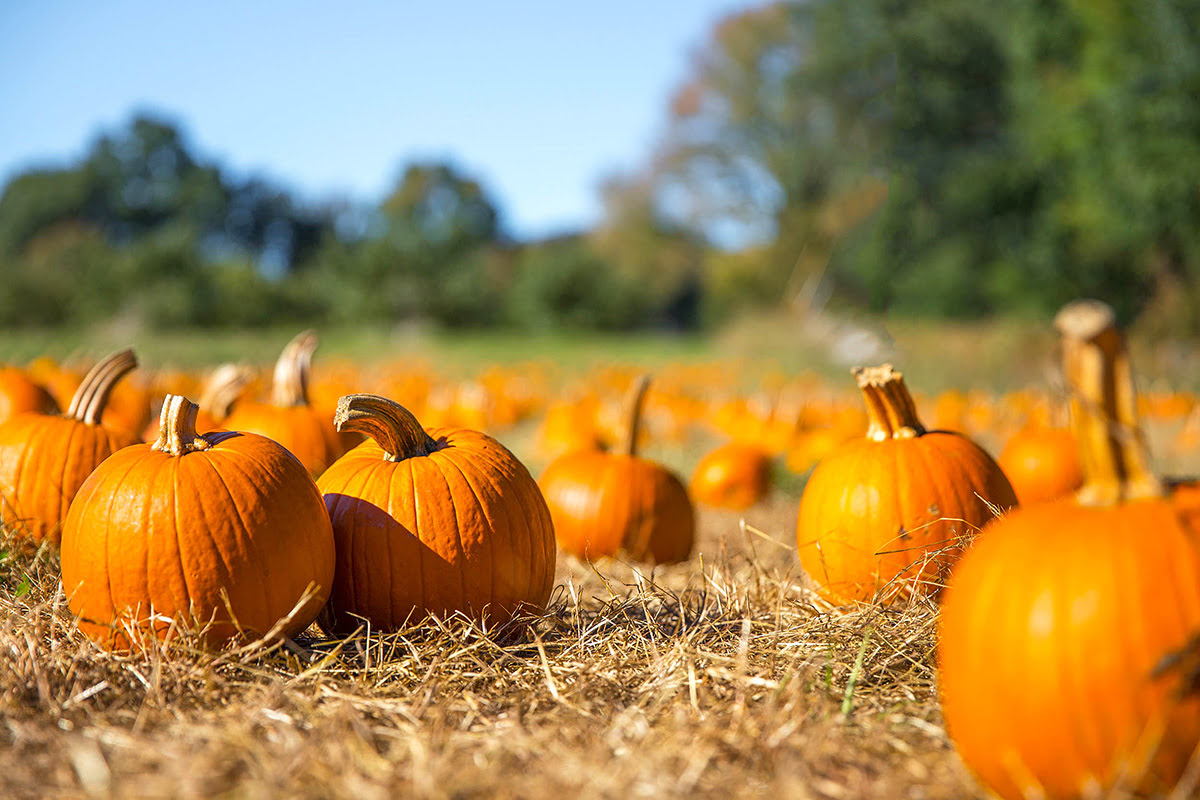 Pumpkin patches-fun fall activities for families-Richmond Country Farms