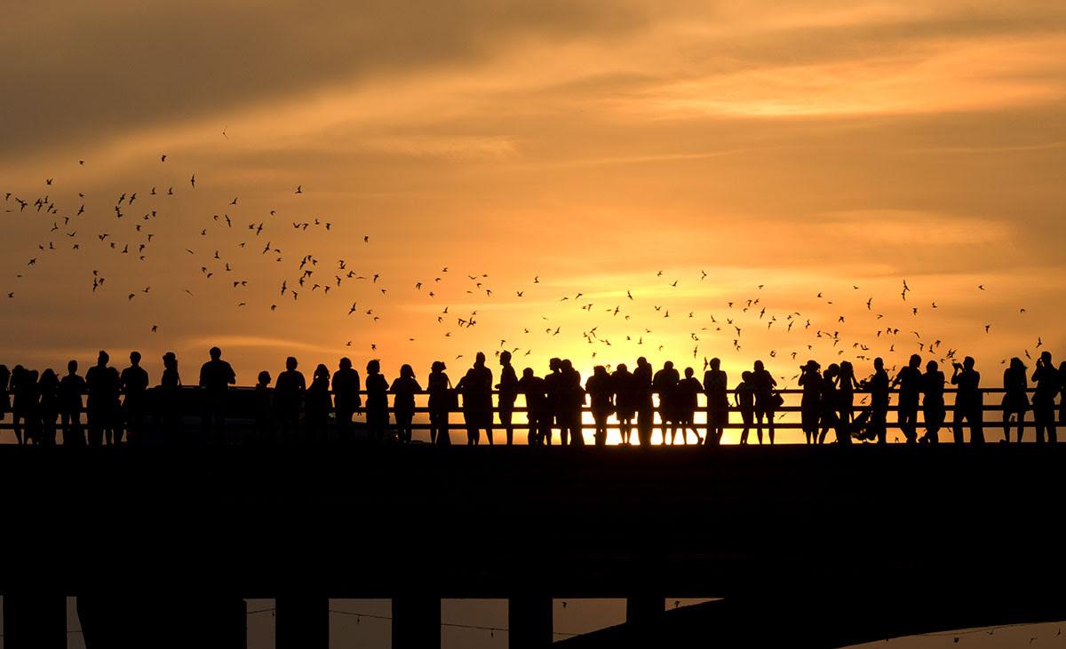 Best graduation trips-cheap summer vacations-Bat Bridge-Austin-Texas