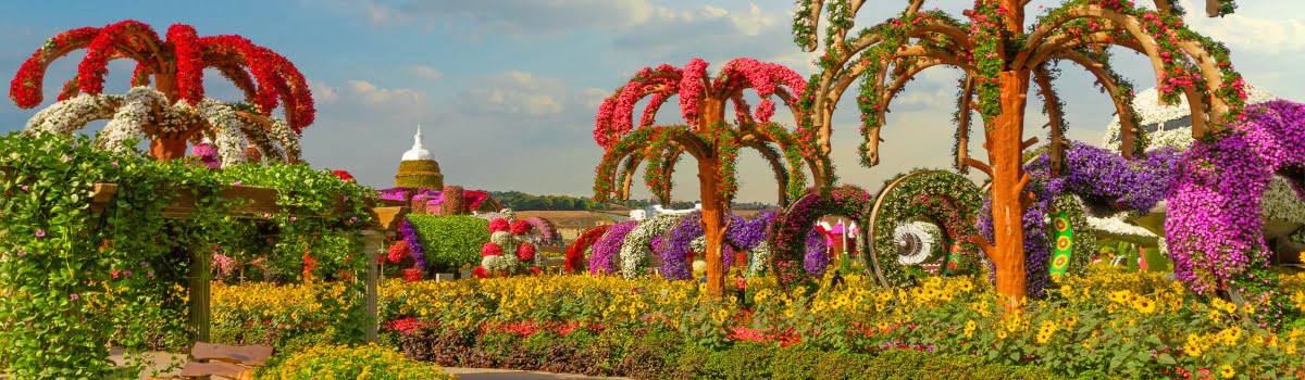 Dubai Miracle Garden Tickets Attractions To The World S Largest Flower Park