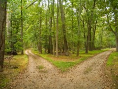 a governing principle in the Bible: the two trees with two lines, two flows, and two destinations! [picture source: on the internet, searching for Two Ways/Two Roads]