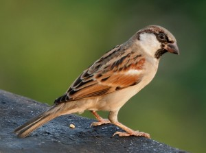 Christ was like a lone sparrow on a housetop, spending much time with the Father