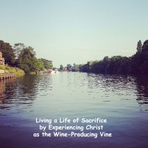 Living a Life of Sacrifice by Experiencing Christ as the Wine-Producing Vine