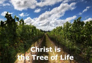 The Tree of Life in the Bible: its Identity, Enjoyment, Operation, and Ministry