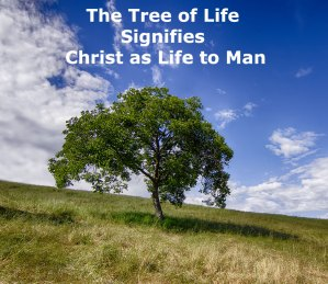The Tree of Life Signifies Christ as Life to Man – He's So Available and Satisfying!