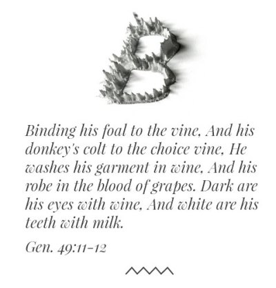 Gen. 49:11-12 Binding his foal to the vine, And his donkey's colt to the choice vine, He washes his garment in wine, And his robe in the blood of grapes. Dark are his eyes with wine, And white are his teeth with milk.