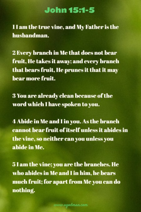 John 15:1-5 1 I am the true vine, and My Father is the husbandman. 2 Every branch in Me that does not bear fruit, He takes it away; and every branch that bears fruit, He prunes it that it may bear more fruit. 3 You are already clean because of the word which I have spoken to you. 4 Abide in Me and I in you. As the branch cannot bear fruit of itself unless it abides in the vine, so neither can you unless you abide in Me. 5 I am the vine; you are the branches. He who abides in Me and I in him, he bears much fruit; for apart from Me you can do nothing.