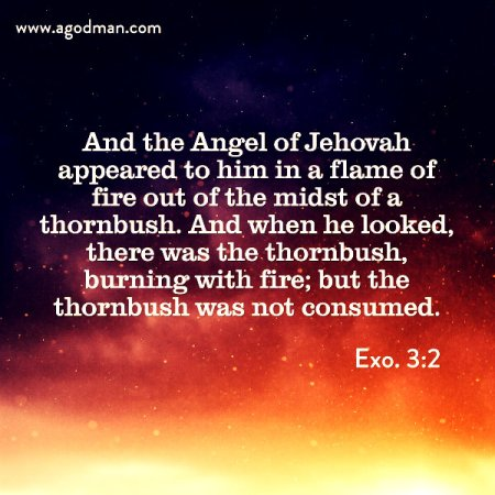 Exo. 3:2 And the Angel of Jehovah appeared to him in a flame of fire out of the midst of a thornbush. And when he looked, there was the thornbush, burning with fire; but the thornbush was not consumed.