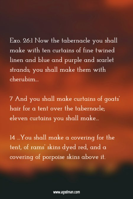 Exo. 26:1 Now the tabernacle you shall make with ten curtains of fine twined linen and blue and purple and scarlet strands; you shall make them with cherubim... 7 And you shall make curtains of goats' hair for a tent over the tabernacle; eleven curtains you shall make... 14 ...You shall make a covering for the tent, of rams' skins dyed red, and a covering of porpoise skins above it.