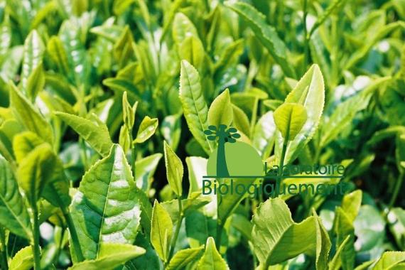 thevert-agoji-antioxidant