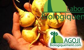 Maca et Libido, antioxydant naturel, Viagra naturel