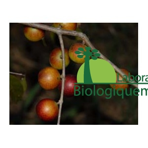 Le camu camu bio antioxydant naturel puissant