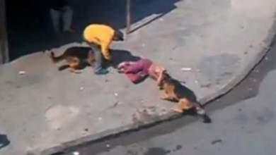 "Photo of فيديو صادم: كلبان ينشهان شخصا بـ""البرنوصي"" بالبيضاء بطريقة عنيفة وصاحبهما في موقع لا يُحسد عليه"