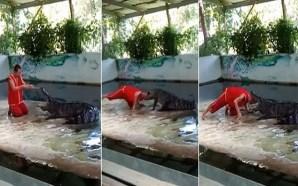 فيديو... تمساح يعض رأس حارس الحديقة أمام الجمهور!