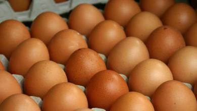 Photo of سحب كميات من البيض يشتبه في احتوائها على آثار مبيدات حشرية من أسواق أوروبية