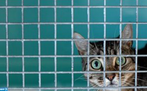 القط ذلك الحيوان الأليف الذي يخلص مربيه من بعض الأعراض…