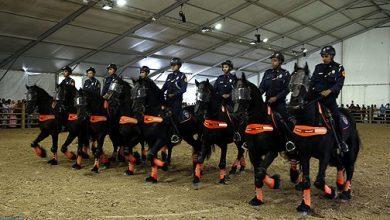 Photo of شرطة الخيالة.. حضور يبعث على الطمأنينة والأمان في المجالات الجغرافية الصعبة