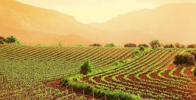 Regione Lazio. Agricoltura: contributi per il settore vitivinicolo