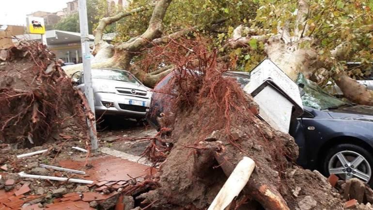 """Terracina. La forza della matrigna natura:  """"le """"improbabili"""" radici a sostegno degli alberi abbattuti"""