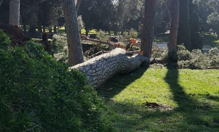 """Roma. Assotutela:""""Manutenzione alberi a pezzi"""""""