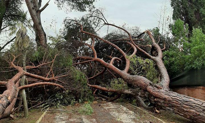 Latina: nottata di vento e acqua, divelti diversi alberi