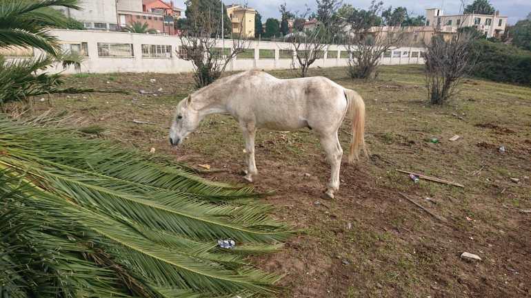 """Ardea, """"Intervenire su secondo cavallo malnutrito"""""""