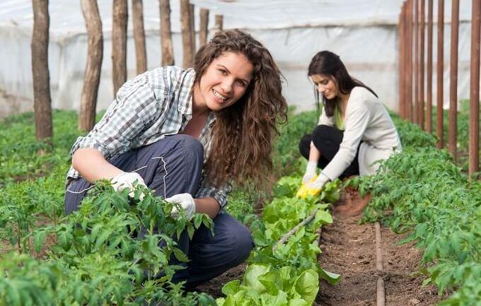 La Regione Lazio ascolti il grido di allarme dei giovani agricoltori