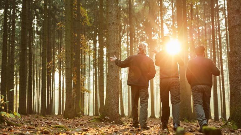 Agricoltura, PSR: ulteriori 2,5 mln euro per ecosistemi forestali