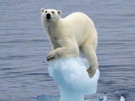 """Résultat de recherche d'images pour """"effet de serre ours"""""""
