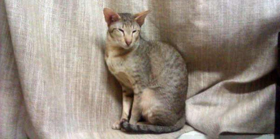 J'Adore, katten bij Trimsalon Agouti