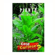 Semi di pianta di tabacco - Certaldo