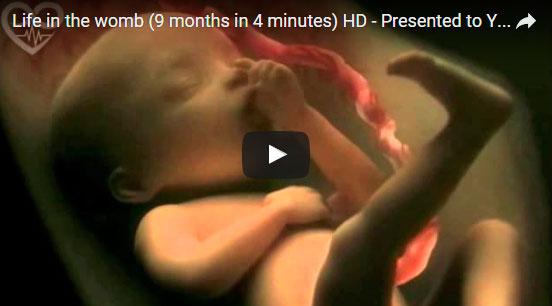 Os nove meses da gravidez em quatro minutos