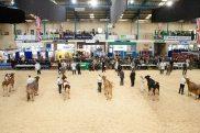 dairy show1