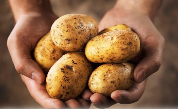 Maraîchage : Pomme de terre, enjeux de la conservation