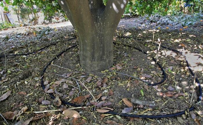 Irrigation : Conduite en verger