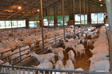 Pays bas : Filière ovine et caprine