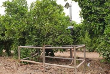 Pilotage de l'irrigation en vergers d'agrumes