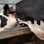 Nutrition : Une eau de qualité pour les bovins: ça coule de source!
