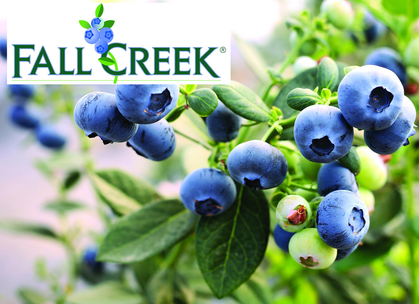 Fall Creek Europe présente la nouvelle Fall Creek Collection™ au salon Fruit Attraction