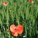 AGRICULTURE BIOLOGIQUE : La Russie se lance dans le bio