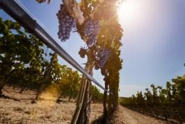IRRITEC: des solutions innovantes pour l'irrigation