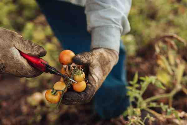 Agricoltura di qualità