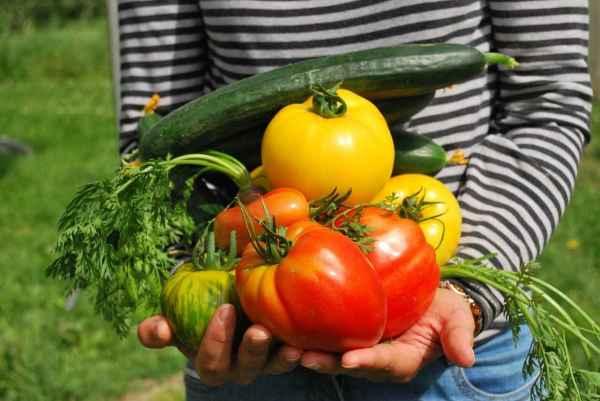 Verdura fresca nelle mani di una ragazza, la dieta mediterreanea detossifica dagli inquinanti