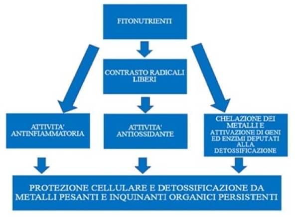 Ecofodfertility, le interazioni dei composti presenti nella dieta mediterranea
