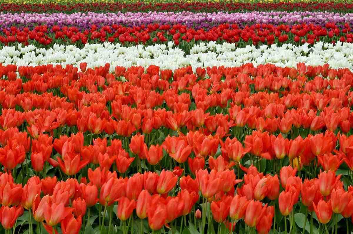 Flower Farming Business Plan
