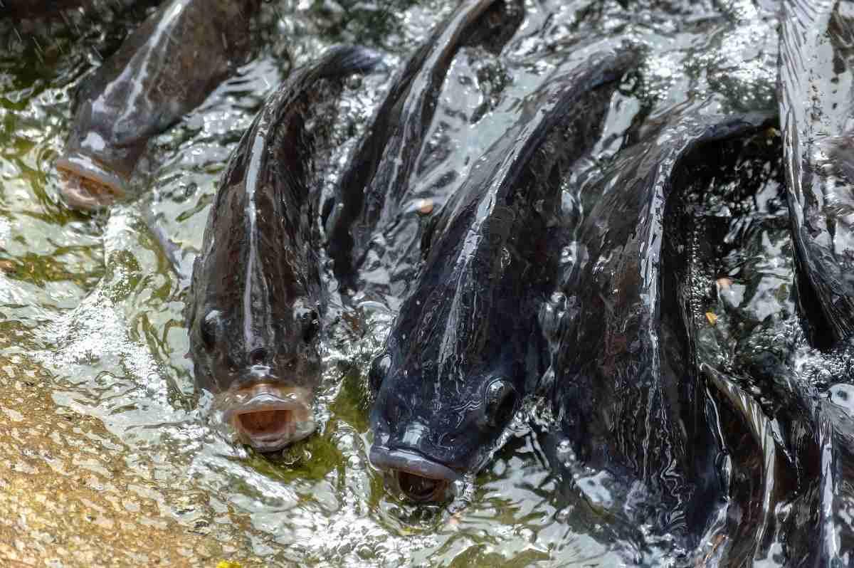 Guide to Fish Farming in Kenya
